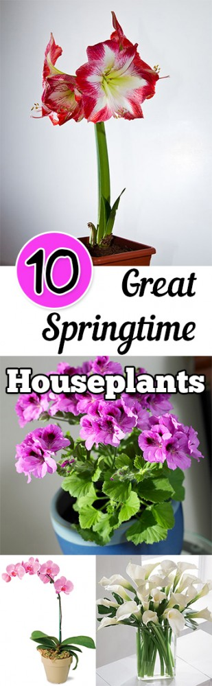10 Great Springtime Houseplants