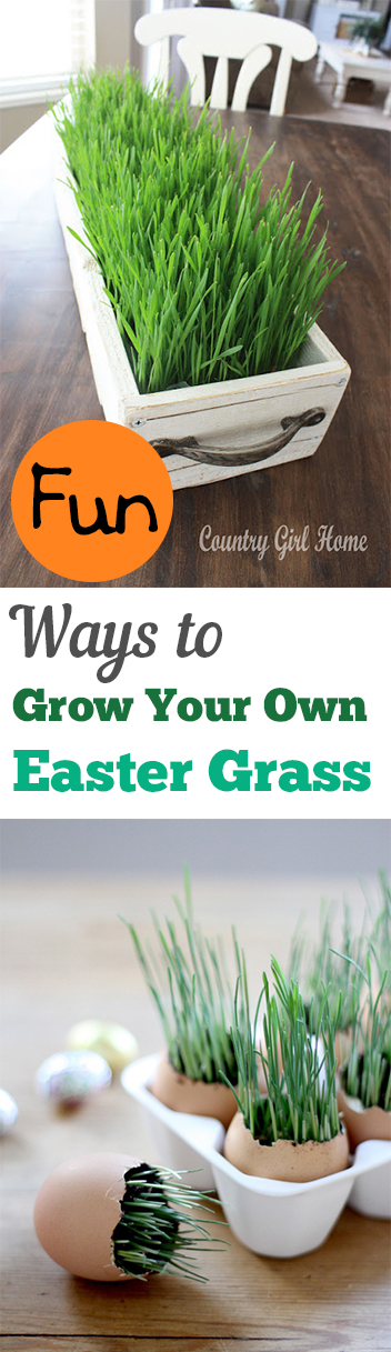 Fun Ways to Grow Your Own Easter Grass
