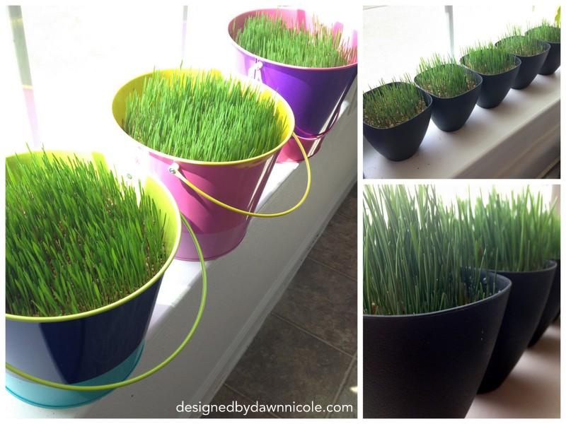 easter grass 7