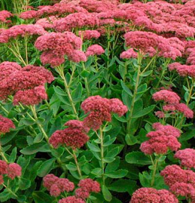 Flower gardening, growing perennials, how to grow perennials, perfect flowers, gardening hacks, popular pin, gardening tips and tricks, how to grow flowers
