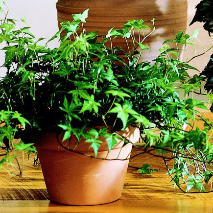 How to grow houseplants, houseplant growing tips, gardening, home garden, garden hacks, garden tips and tricks, growing plants, gardening DIYs, gardening crafts, popular pin.