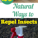 20 Natural Ways to Repel Insects