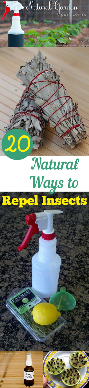 20 Natural Ways To Repel Insects Page 3 Of 21 My List