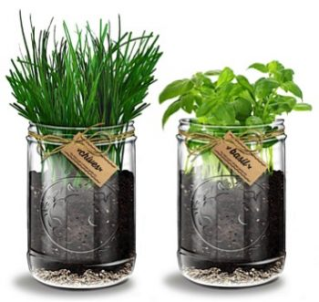 herb-garden-kit