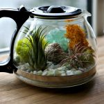 12 Affordable Terrariums You Can DIY Yourself| Terrariums, DIY Terrarium, Terrarium Projects, Indoor Gardening, Indoor Gardening Tips, DIY Gardening Projects, DIY Terrarium, Make Your Own Terrarium #DIYTerrarium #IndoorGarden #Home