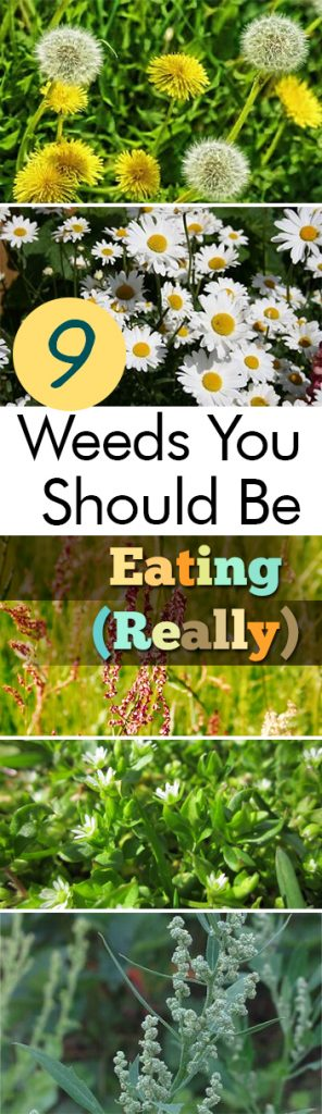 9 Weeds You Should Be Eating (Really)| Gardening, Gardening Hacks, Weed Control, Edible Plants, Edible Weeds, Gardening Tips and Tricks, Life Hacks #EdibleWeeds #Garden