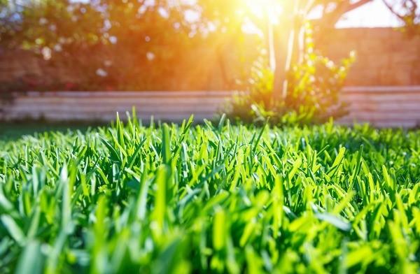 Make Your Yard Look AMAZING With This Hack| Yard, Yard Hacks, DIY Yard, DIY Yard Stuff, Home Improvements, Landscaping, Landscaping Hacks, Landscaping DIYs, Popular Pin #Landscape #Yard