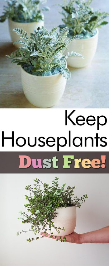 Keep Houseplants Dust Free!| Dust Free Home, Dust Free, Houseplants Indoors, Dust Free Home TIps, Houseplants Decor #DustFreeHome #HouseplantsIndoors #DustFreeHomeTips