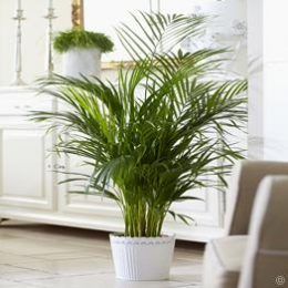 Properly Care for ALL of Your Houseplants| Houseplants, Houseplants Indoor, Houseplant Care Guide, Indoor Gardening, Indoor Garden, Indoor Garden DIY, House Plants, House Plants Indoors