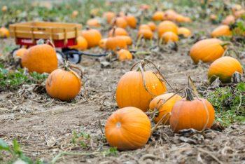Fall To Do List | Fall Chores List | Fall Chores Tips and Tricks | DIY Fall To Do List | Fall | Autumn | Fall Hacks | Fall Tips and Tricks | Home and Garden for Fall