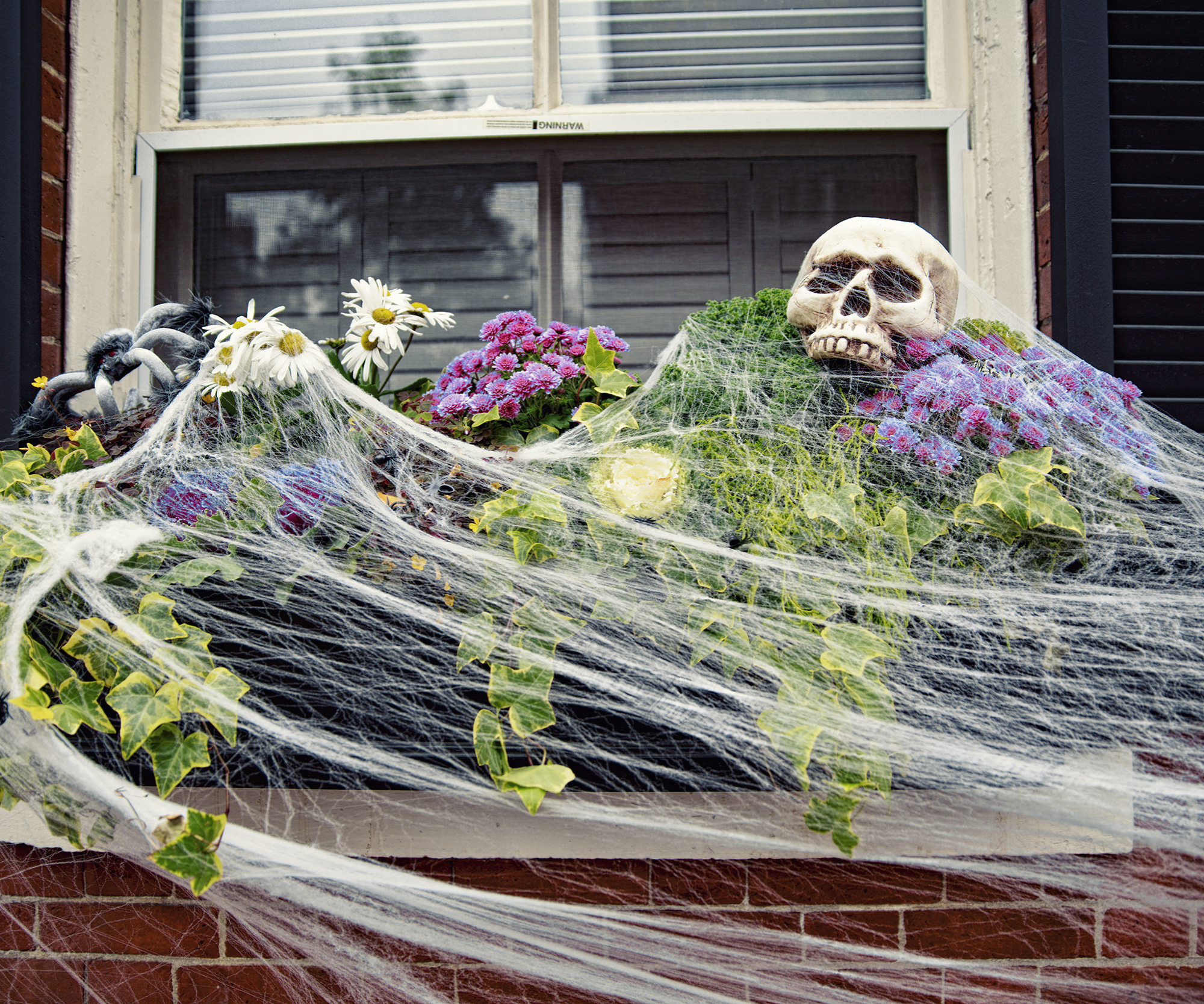 Scary Window boxes for Halloween